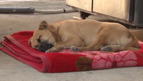 一睡着就会做噩梦的狗狗,到底遭受了什么?看完忍不住泪目!