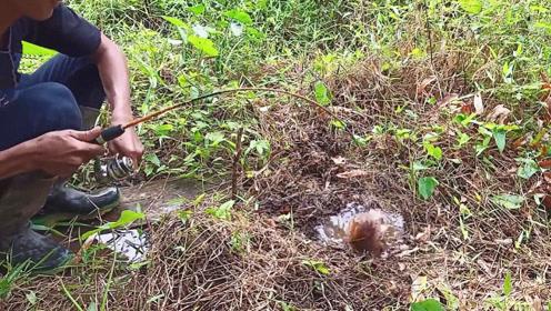 杂草中的一个小洞穴,男子将鱼饵伸进去,结果接连中大鱼,真爽!