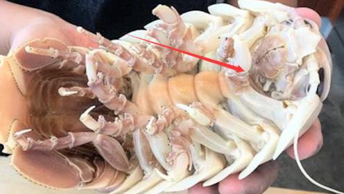 深海巨型大虱,看上去让人头皮发麻,日本人却把它当美食!