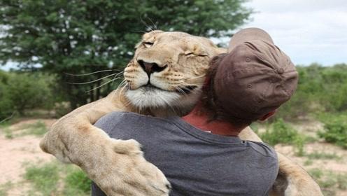 狮子和6年前的救命恩人重逢,狮子反应出乎意料,真的太暖心了