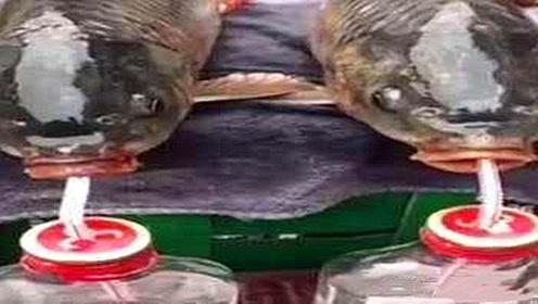 男子在船上喝酒,扭头发现一条鱼张着嘴,给鱼喝点后不得了!