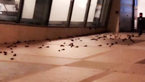 上百只雨燕撞上美国纳斯卡名人堂死亡 凶手竟是它