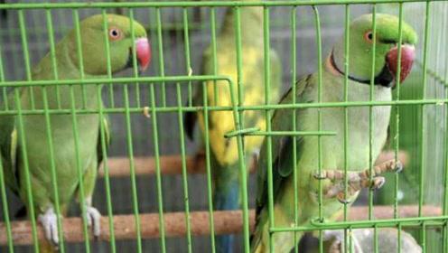13只鹦鹉上印度法庭当证人,法官还当庭向它们问话......