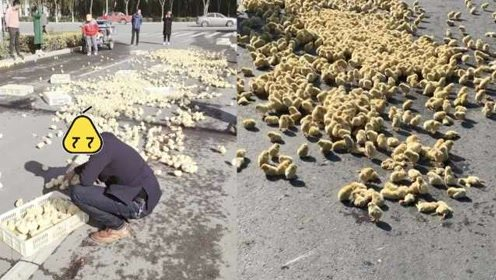 货车甩出数百只小鸡,附近群众拿筐捡回家:不捡会被车轧死