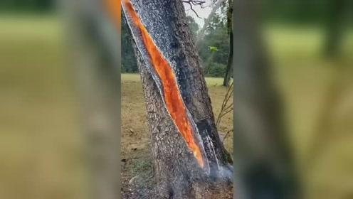 美翻了!大树被闪电击中后树干内部竟燃起熊熊大火