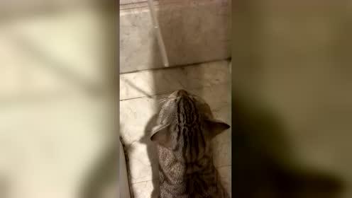傻猫!这是净水器不是饮水机啊