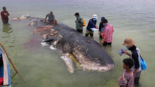 东北渔民抓到2000斤的怪鱼,渔民并没有将鱼卖掉,而是找到专家