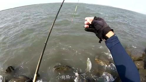 海钓,窝料打下去,小鱼太多了,狂拉金钱仔,石鲈,黄尾瓜