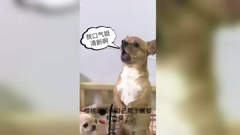 狗狗睡觉不起床,女主人说了什么,狗狗为何这副表情