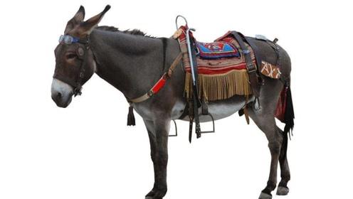 动物百科:驴的品种有哪些?