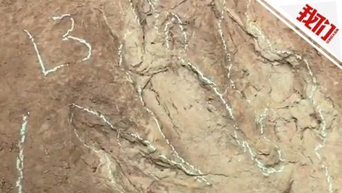 """四川村民在山上发现巨大""""鸡爪印"""" 系侏罗纪晚期食肉恐龙留下"""