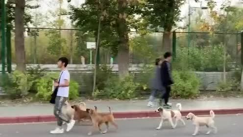 此乃是狗中王者单身狗王啊!混到这地步!旁边的路人全都羡慕了!
