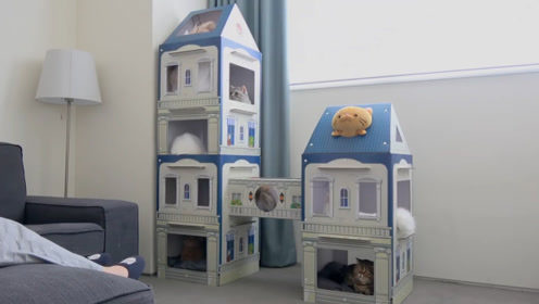给猫盖栋别墅,猫猫们玩的特别开心,玩累了直接睡,特别便利