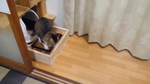 为了防止猫砂到处跑,小哥设计了个脚垫,效果会如何呢?