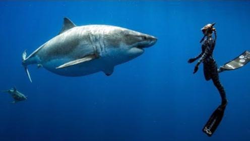 在海底遇到一头鲨鱼,对视10秒后,神奇才刚刚开始!