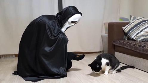 万圣节要来了,扮鬼脸看看猫咪有什么反应?太搞笑了!