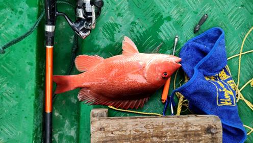 虎子出深海钓鱼,遇见了红鱼群,上水后鱼的颜色就变淡,真漂亮