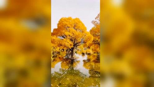 这才是真正的风景美如画,北国风光,震撼的美!