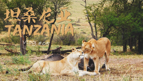 非洲行VLOG 06 | 终于等到动物大迁徙