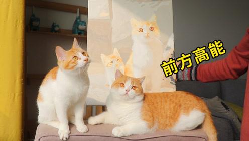 2只橘猫再次同框,大橘惨遭暴扣:画里都是假的