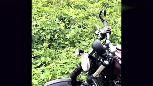 草丛里面捡到一辆摩托车,没人要吗?有谁想要的过来捡!