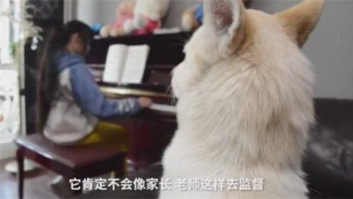 狗狗监督小主人学习弹琴跳舞,主人好省心!