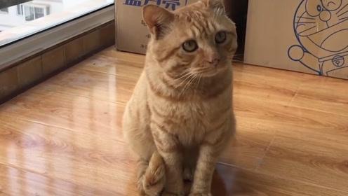 为什么撒狗粮不能叫撒猫粮?2只猫咪大秀恩爱,这场景太甜了