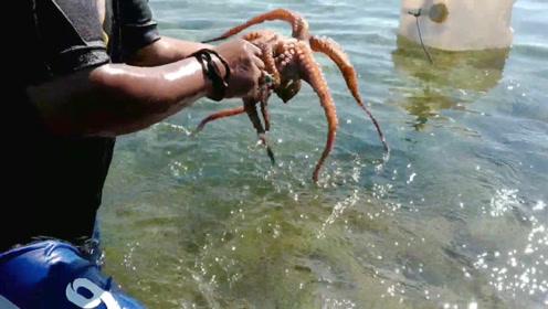 清澈见底的海边,摸上来一个八爪鱼!