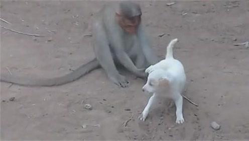 再调皮的狗狗遇到猴子,都会生不如死!