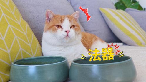 猫零食开箱,15只猫疯抢,铲屎官感叹:开箱变开饭