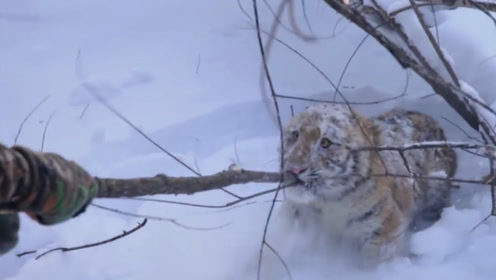 男子在雪地里听到猫叫声,看清楚后不得了,镜头记录全过程