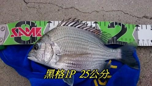 澎湖矶钓,水干净鱼多,真是钓鱼人的天堂