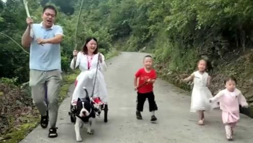 男子乘狗拉车时速堪比摩托,网友不淡定了跑烂了狗爪