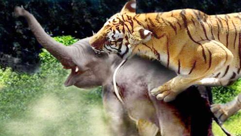 飞跃大象的那一刻,才知老虎有多厉害,镜头记录全过程!