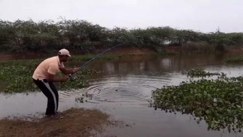 野钓突然中了一条大鱼,男子激动得手忙脚乱