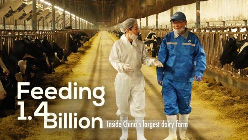 大国农业第四集:中国乳业