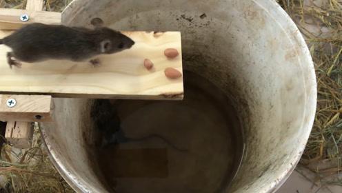 最奇葩的捕鼠陷阱,老鼠排队往里跳,不费吹灰之力抓一窝!