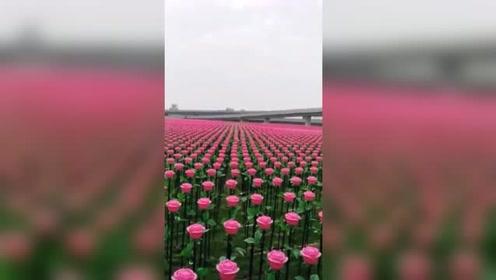 这花朵种的真讲究,网友:被军训过的花朵果然不一般!