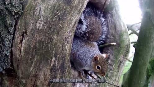 松鼠发现一个藏身树洞却遇到猫头鹰,猫头鹰:给你个眼神自己体会