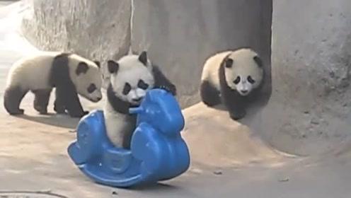 熊猫宝宝想要爬上小马摇椅,不料却摔了个人仰马翻