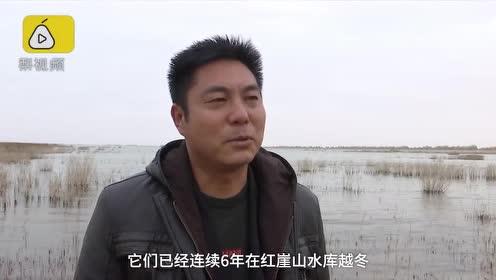 人间仙境!亚洲最大沙漠水库变身天鹅湖,迎6千只候鸟越冬