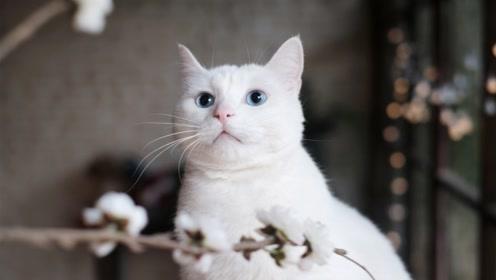 猫的平衡感有多强,没有动物能比过它,网友:难怪有猫步一说,这惊人的反应