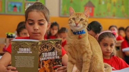 """这一只爱上""""学习""""的小猫,每天都去学校报道,上课比学生还认真"""