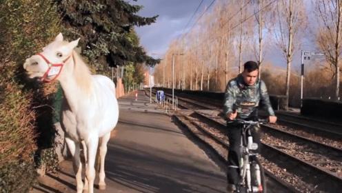 一匹马在街头独自散步14年,每天风雨无阻,警察表示不用管它!