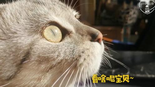 捕捉到超帅气的小猫侧颜,眼睛像宝石一样漂亮,猫:我向往自由