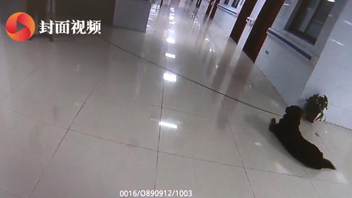大黑狗夜闯医院吓坏病人  民警出奇制胜一招将其诱离