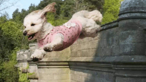 """世界上最可怕的""""鬼桥"""",600多只狗跳下身亡,专家赶来傻眼了"""