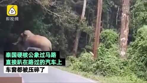 泰国硬核大象过马路,遇汽车直接泰山压顶