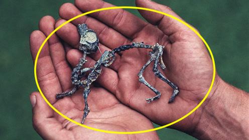 曾经被专家误认为最小的恐龙,一番调查后,专家都傻眼了!