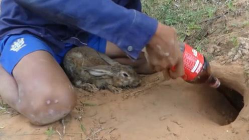 农村小伙花样多,竟直接用可乐抓兔子,两瓶进洞就掏出一窝